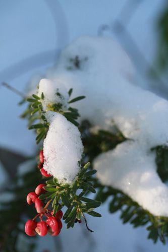 neige sur sollies (36)
