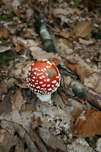 champignons-de-foret 2682