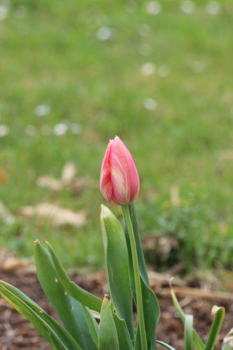 fleurs d' avril 0363