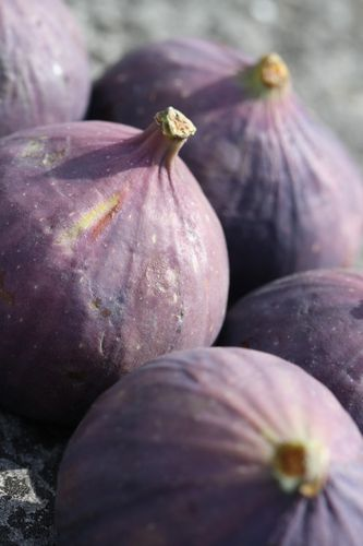 Figues-rouges.JPG