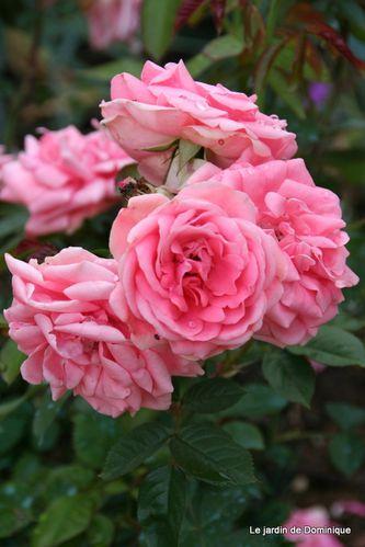 Roses-2010 2238
