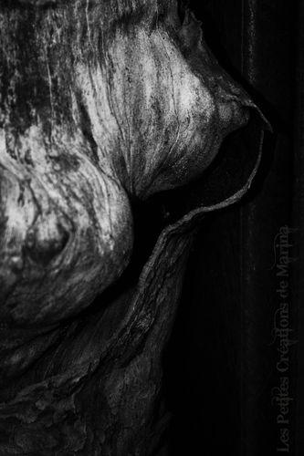 seins-de-l-arbre-anag.jpg