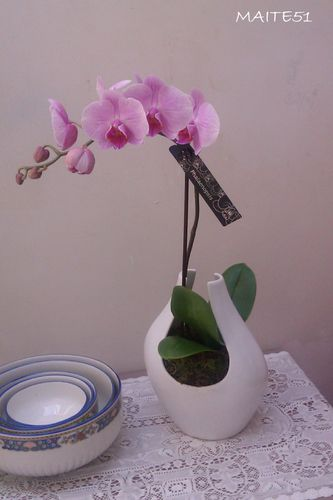 Orchidée de mamie 27 05 2012