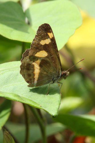 papillons 8970