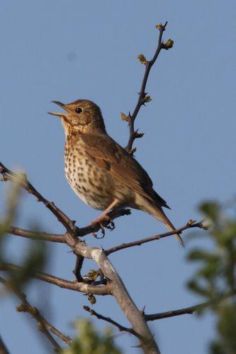 oiseaux1196