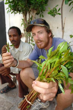 bruce leslie sampling khat in djibouti