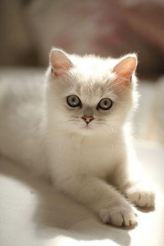 chat-je-suis-beau.jpg