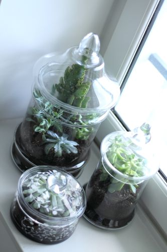cr er 14 un terrarium avec ses 10 ptits doigts blog diy. Black Bedroom Furniture Sets. Home Design Ideas