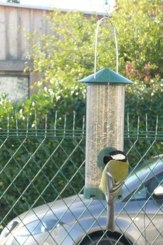oiseaux-jardin-04.JPG