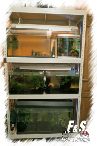 Fish-ShrimpRoom 1274