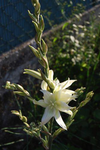 drole de fleurs -