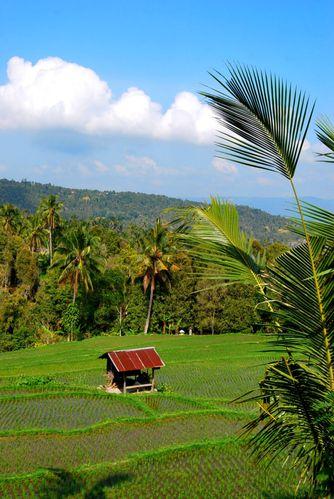 Indonesie 0709