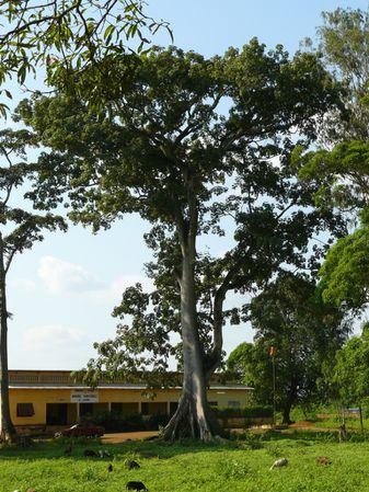 loudima-gendarmerie-arbre