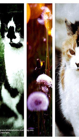 Les-deux-chats-jpg-fond-d-ecran-gratuit-pour-Samsung-Galax.JPG