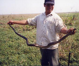 Amazonie - serpent