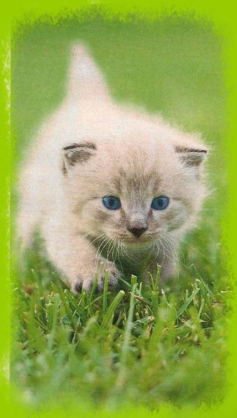 Images-preferees-Chaton-craquant.jpg