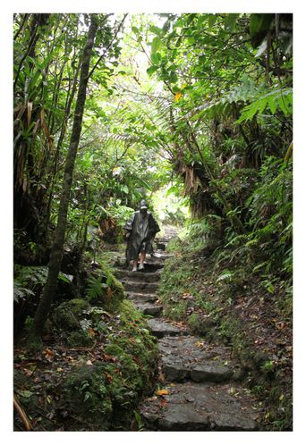 forêt souffriere guadeloupe