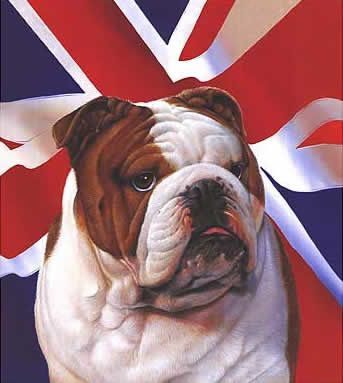british-bulldog.jpg