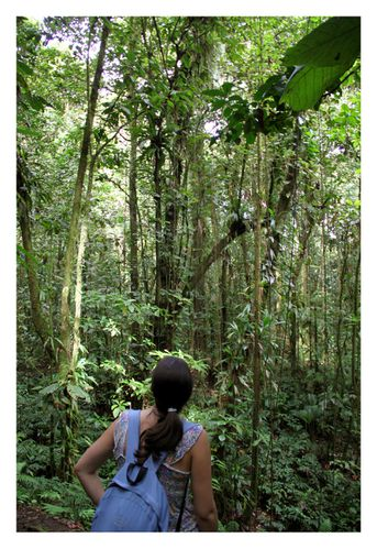 balade foret tropicale guadeloupe
