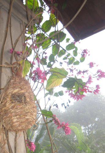 Animaux-Oiseaux--et-Cie 4721