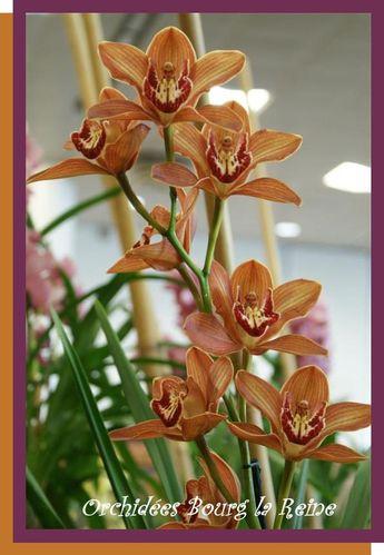 Orchidee-DSC02106--Medium-.JPG