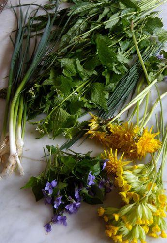 fleurs sauvages et Léonard 037