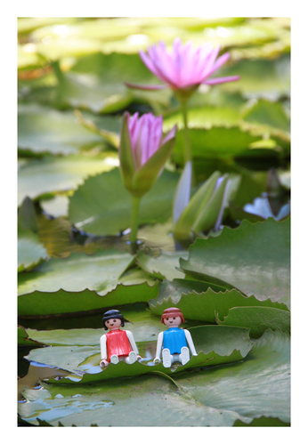 jardin pamplemousse