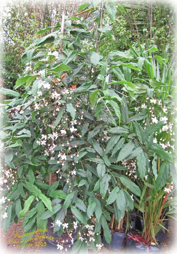 Exposition fleurs KK 004 modifié-1