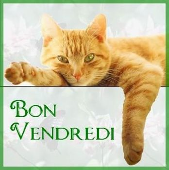 chat-vendredi-fb-oct-14.jpg