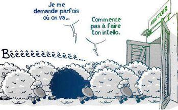 mouton-abattoir.jpg