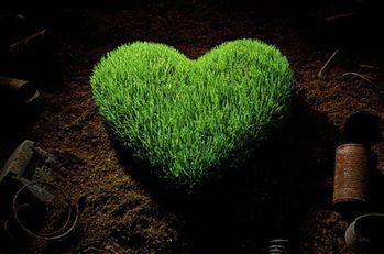 green-heart-1_l6e.jpg