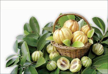 La recherche a montré que cet extrait du Garcinia Cambogia pris ...