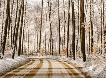 conrad miesche winter road through the forest