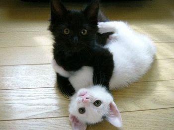 chats-envoys-par-Isa.jpg