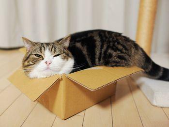 maru-chat-dans-carton.jpg