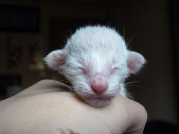 Tiny boy 2d (1)