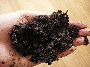 Un compost récolté ne pue pas! il n'est ni trop sec, ni trop humide. Faire le test de la poignée