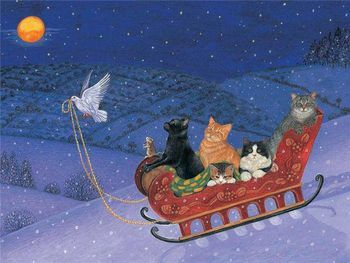 chat nuit noel fb 14