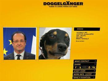 chien.jpg
