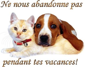 Chat-chien-abandon-FB-26-6-13.jpg
