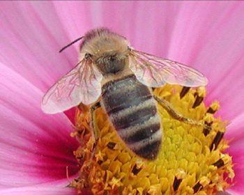 abeille_1280.jpg