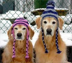 manteau en laine pour chien