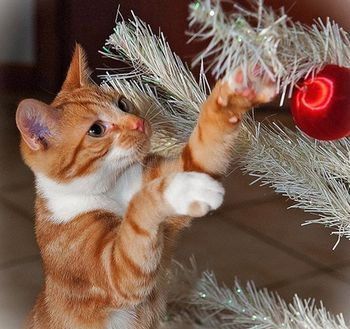 chat-boule-noel-fb-12-dec-14.jpg