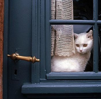 chat-porte-bleue-fb-sept-14.jpg