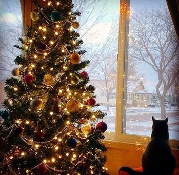 chat-noel-adieu-2014-fb.jpg