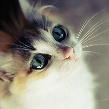chat-yeux-aigue-marine-fb-aout-14.jpg