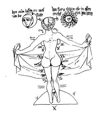 Bouvier Venus