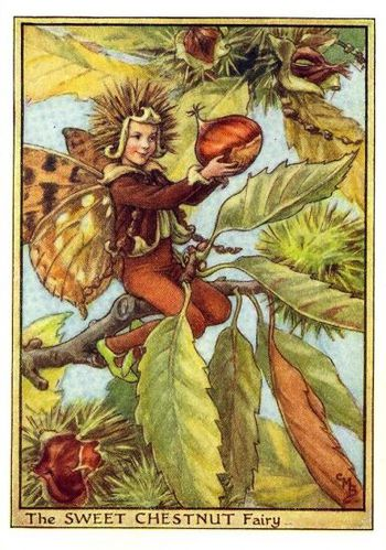 sweet_chestnut_flower_fairy.jpg