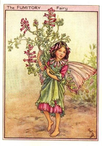 fumitory flower fairy