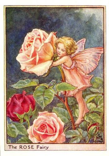rose flower fairy